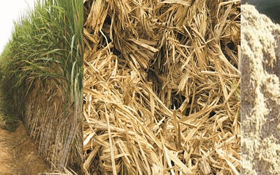 Biomass Pellets: ACEES focusing on greater heights on alternative energy technologies.