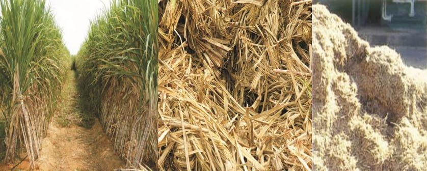 Sugar Cane Bargasse